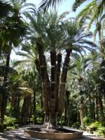 El Palmeral de Elche-Alicante